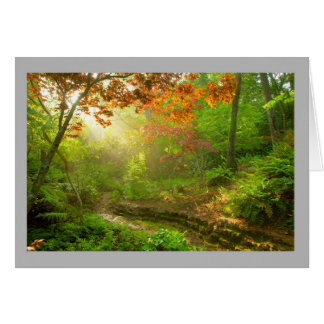 Landscape 46 Sunny autumn leaves stream forest Card