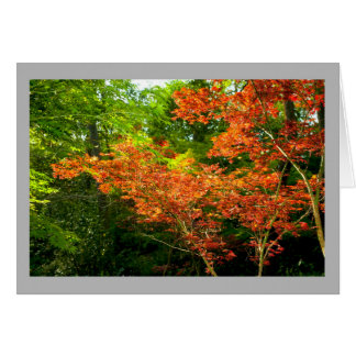 Landscape 47 Sunny color autumn leaves forest Card