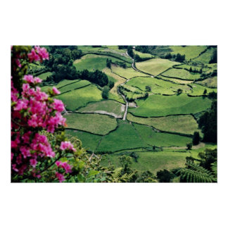 Landscape at Sao Miguel, Acores Islands  flowers Posters
