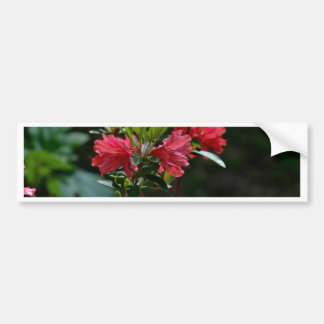 Landscape Beauty Bumper Sticker