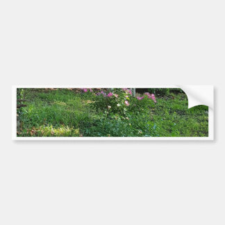 landscape Beauty of Nature Among the ivy Bumper Sticker