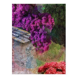 Landscape ,buganvillas  in full color postcard