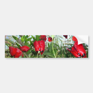 Landscape Close Up Poppies Against Morning Sky Bumper Sticker
