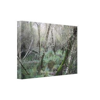 Landscape cork oaks and nature in Doñana, Spain Canvas Print