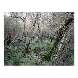 Landscape cork oaks and nature in Doñana, Spain Postcard