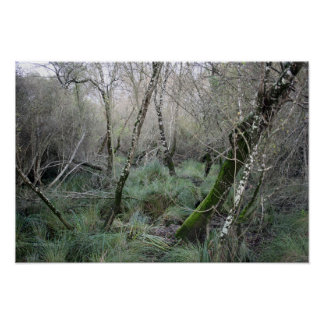 Landscape cork oaks and nature in Doñana, Spain Poster