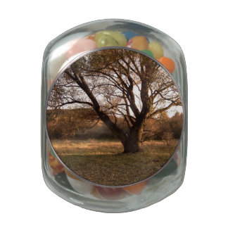 Landscape in Hungary Jelly Belly Candy Jars