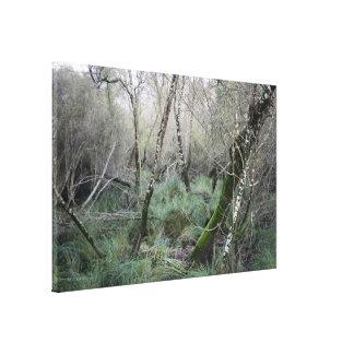 Landscape nature and cork oaks in Doñana, Spain Canvas Print