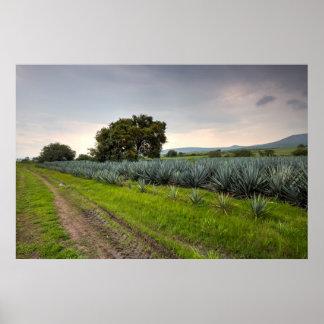 Landscape Of Blue Agave Poster