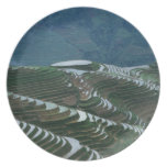 Landscape of rice terraces in the mountain, 2 plate