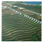 Landscape of rice terraces in the mountain, 3 ceramic tile