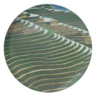 Landscape of rice terraces in the mountain, 3 melamine plate