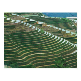 Landscape of rice terraces in the mountain, 3 postcard