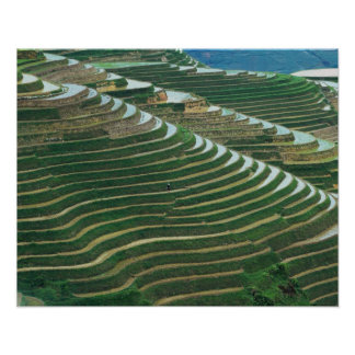 Landscape of rice terraces in the mountain, 3 poster
