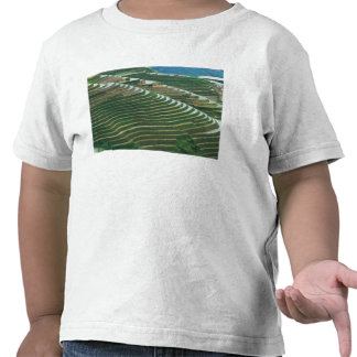 Landscape of rice terraces in the mountain, 3 tshirts
