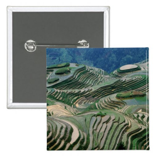 Landscape of rice terraces in the mountain, button