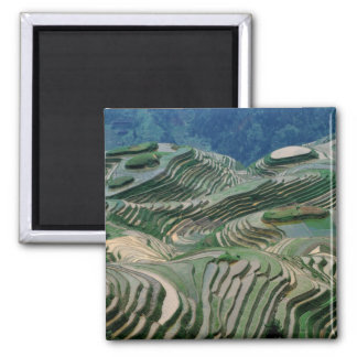 Landscape of rice terraces in the mountain, 2 inch square magnet