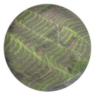 Landscape of rice terraces in the mountain, melamine plate