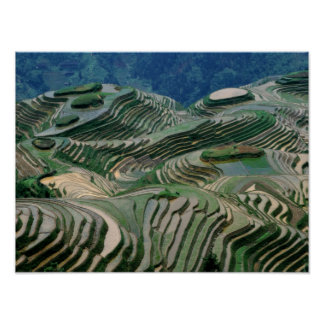 Landscape of rice terraces in the mountain, poster