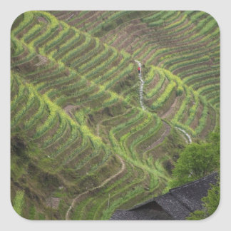 Landscape of rice terraces in the mountain, square sticker