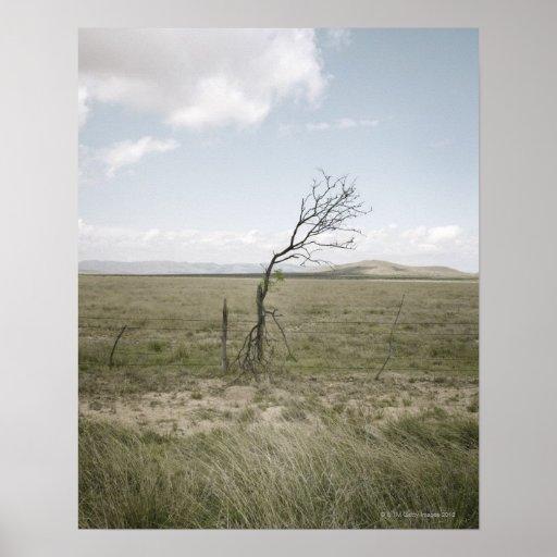 Landscape, Texas, USA Poster