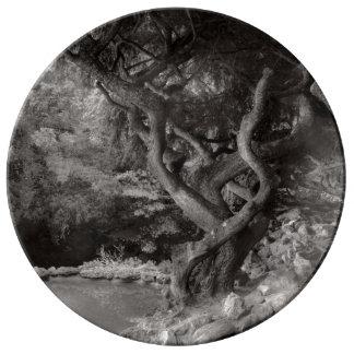 Landscape - The Forbidden Forest Porcelain Plate