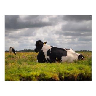 Landscape with 2 cows postcard
