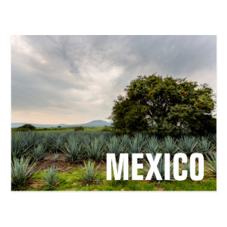 Landscape With Blue Agave Postcard