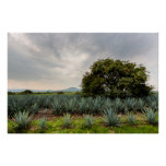 Landscape With Blue Agave Poster