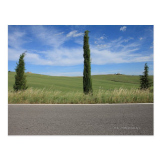 Landscape with Cypresses Postcard