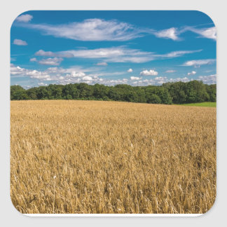 Landscape with grainfield and blue sky square sticker