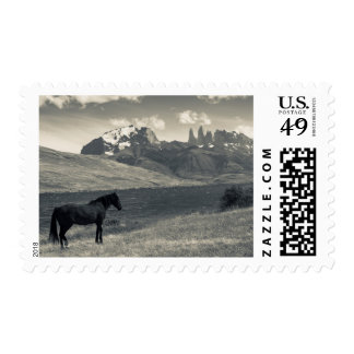 Landscape with horses 2 postage
