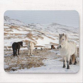 Landscape with Icelandic Horses Mouse Pad