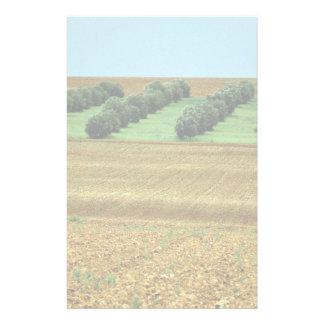 Landscape with olive trees, La Mancha, Spain Stationery