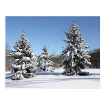 Landschap met sparren en sneeuw postcard