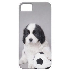 Landseer football player iPhone SE/5/5s case