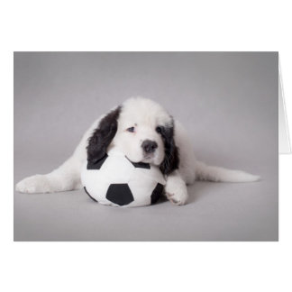 Landseer puppy card