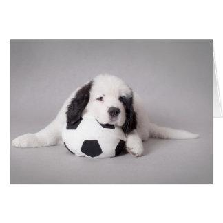 Landseer puppy greeting card