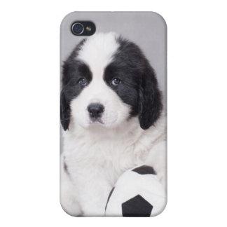 Landseer puppy iPhone 4/4S case