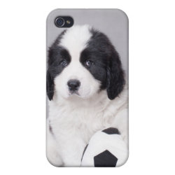 Case Savvy iPhone 4 Matte Finish Case with Newfoundland Phone Cases design