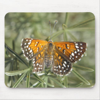 Lange's Metalmark Butterfly Mouse Pads