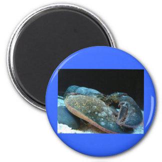 langosta azul imán redondo 5 cm