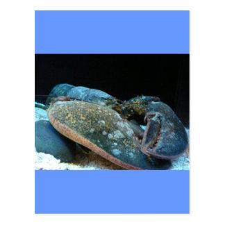 langosta azul postales