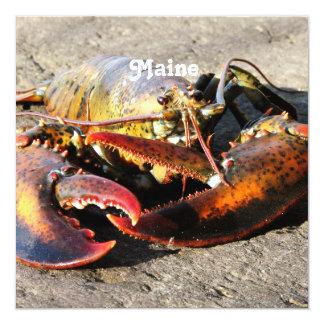 Langosta de Maine Comunicados
