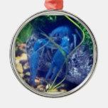 langosta del azul del colorfull ornamente de reyes