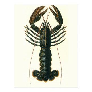 Langosta del vintage, vida marina del océano postales