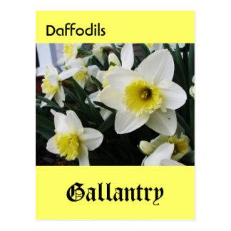 Language of Flowers Daffodils Gallantry Postcards