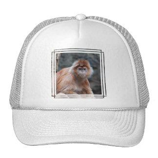 Langur  Baseball Hat