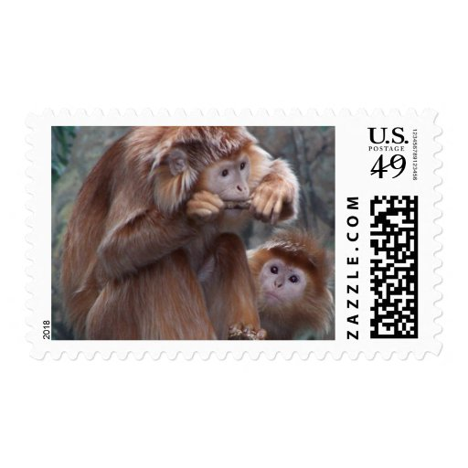 Langur Chews Stick While Other Monkey Watches Postage Stamps