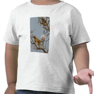 Langur de Hanuman que sube en árbol Camiseta